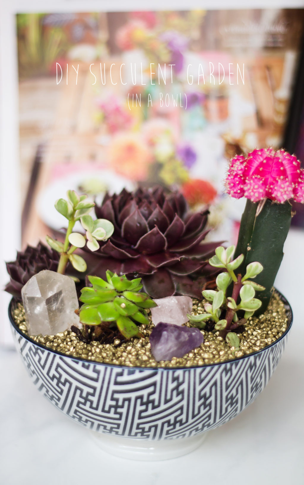 Diy Succulent Garden The Blondielocks Life Style