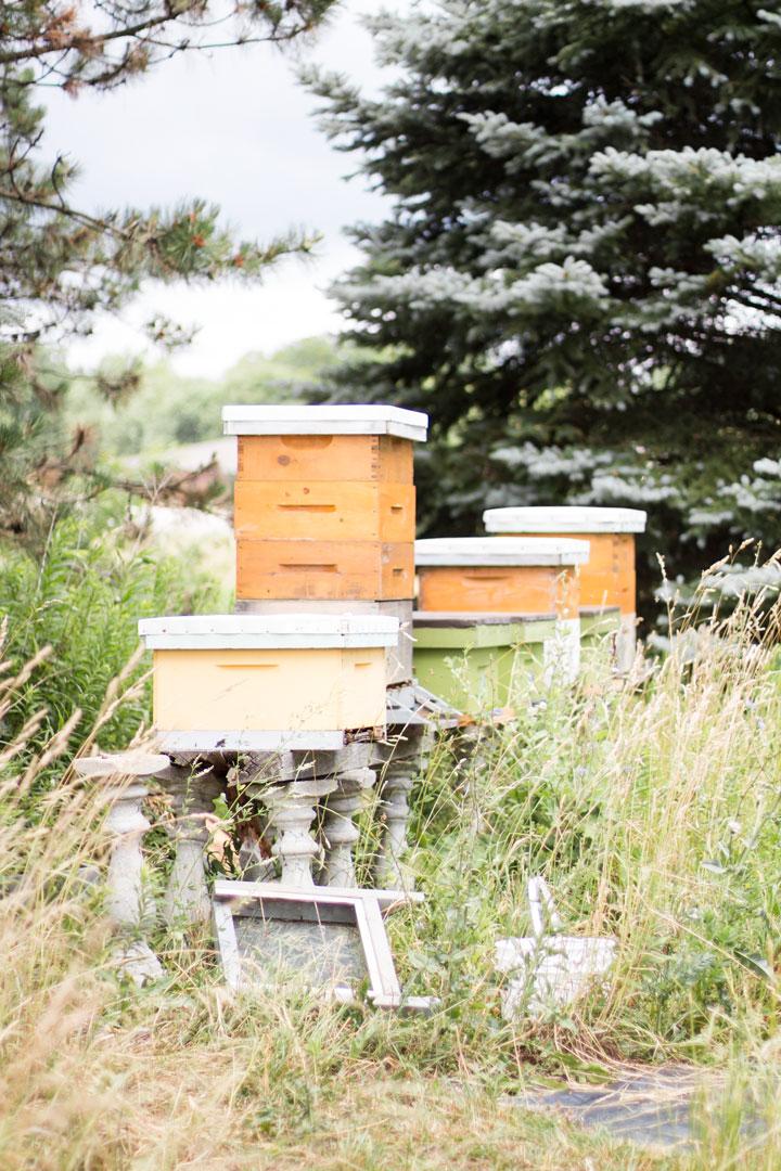 weirs-lane-bee-farm-3