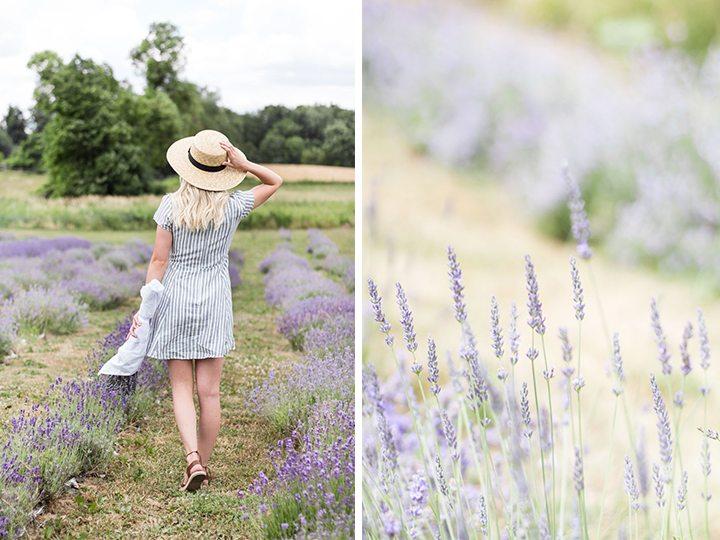 weirs-lane-lavender-4