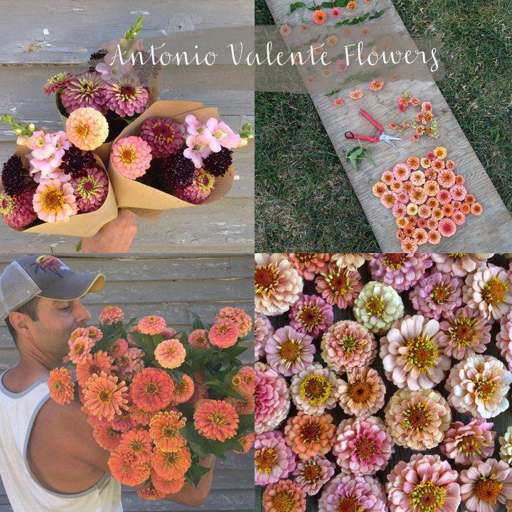 antonia-valente-flowers copy